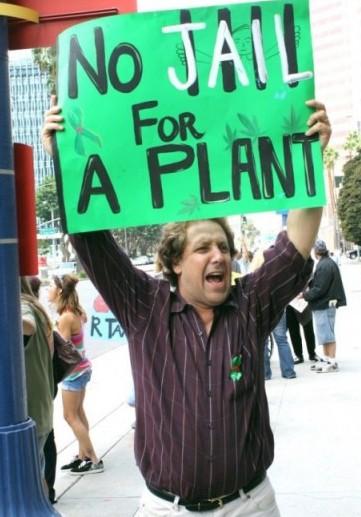 Marijuana No Jail for a Plant